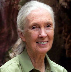 Dr. Jane Goodall, DBE founder of the Jane Goodall Institute and United Nations Messenger of Peace